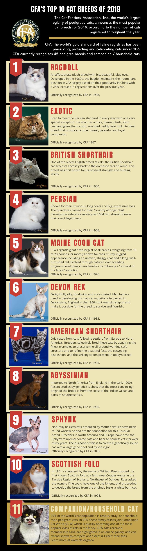 CFA Top Cat Breeds 2019
