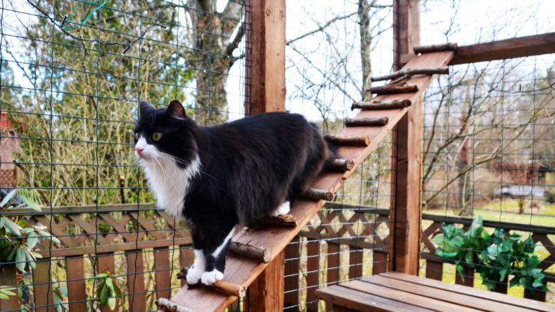 cat patio