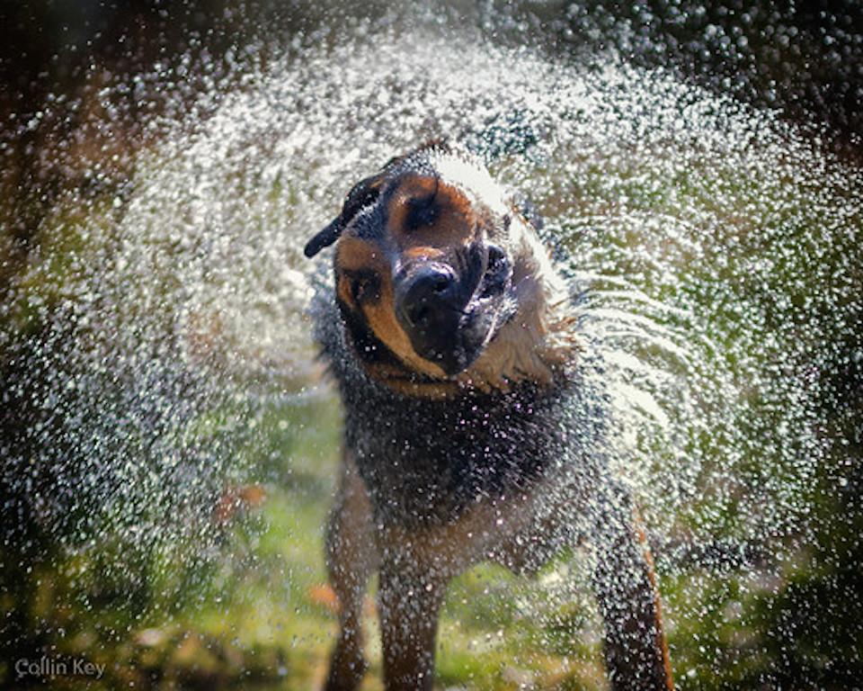 Flooding Pet Safety